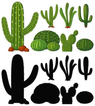 サボテンの植物のセット