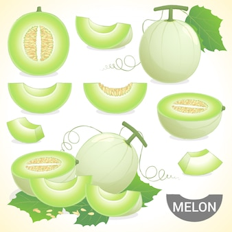 様々なスタイルのベクトル形式のカンタロープハニーデューハニーメロン果実のセット