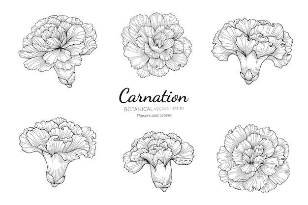 흰색 배경에 라인 아트와 카네이션 꽃과 잎 손으로 그린 식물 그림의 집합입니다.