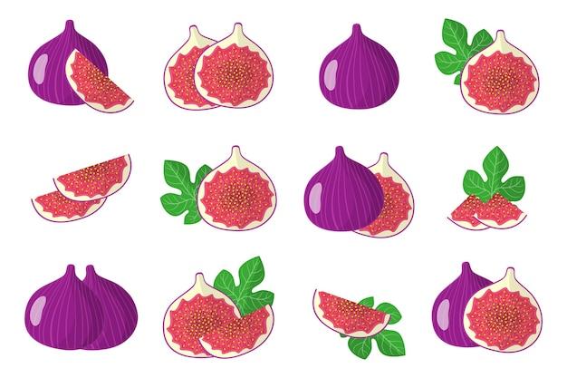 Набор карикатурных иллюстраций с экзотическими фруктами, цветами и листьями инжира, изолированные на белом фоне