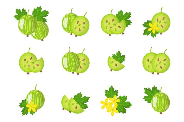 Набор карикатурных иллюстраций с целым, половиной, нарезанным кусочком экзотических фруктов, цветов и листьев крыжовника, изолированных на белом фоне