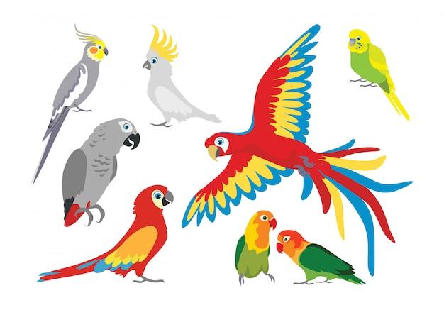 Набор мультяшных попугаев.