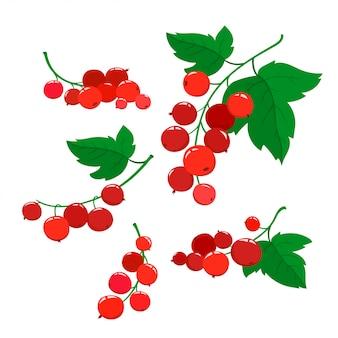 Набор мультфильмов ягод красной смородины с зелеными листьями, изолированных на белом фоне.