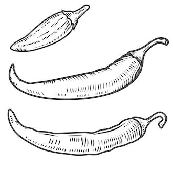 Комплект перцев chili на белой предпосылке. элементы для логотипа, этикетки, эмблемы, плаката, меню. иллюстрация