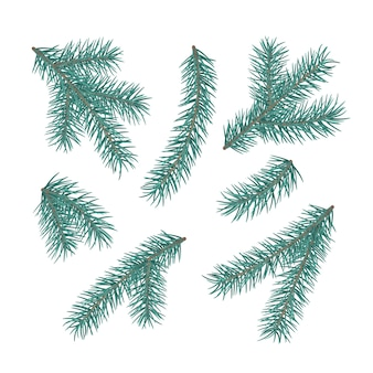 Набор веток елки