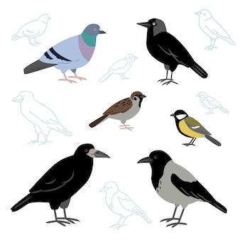 도시 새의 집합 유럽 새 까마귀 비둘기 갈까마귀 참새 젖꼭지와 루크