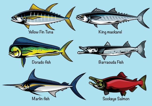 Набор цветной рыбы иллюстрации Premium векторы
