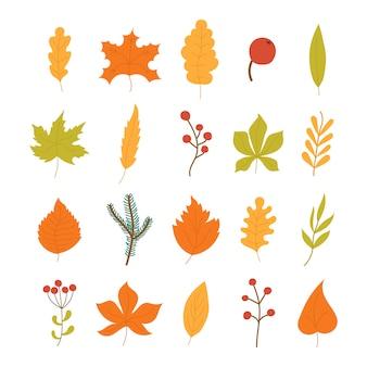 화려한 단풍과 열매 흰색 배경에 고립의 집합입니다. 노란색 단풍 정원 잎, 붉은 가을 잎과 떨어진 마른 잎. 간단한 만화 평면 스타일,