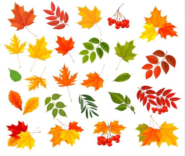 Набор красочных осенних листьев.