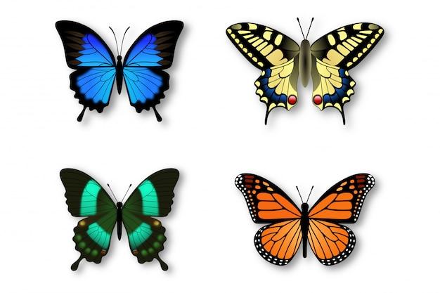 カラフルな蝶のセット