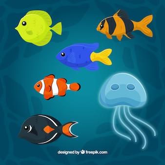 異なる種のカラフルな魚のセット