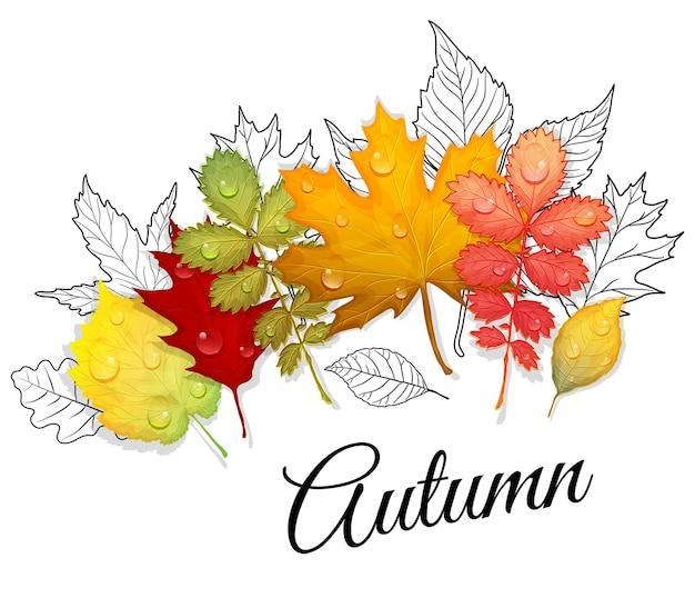Набор красочных листьев вектора