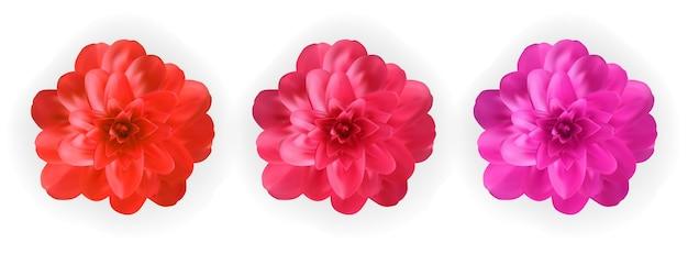 カラフルな自然主義的な開花ピンク、赤、紫の椿の花のセット