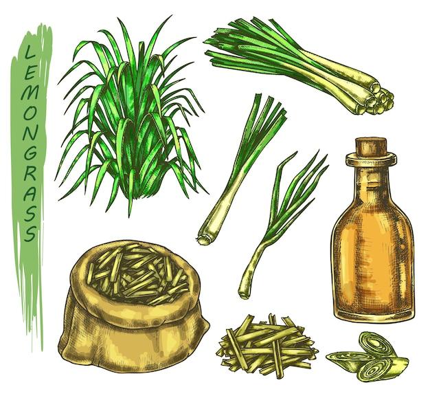 レモングラスの植物とオイル入りボトル、ティースパイス付きバッグまたは袋のカラフルなスケッチのセット。レモングラスまたはシンボポゴンのハーブ、有刺鉄線またはコーチン、マラバルグラス。