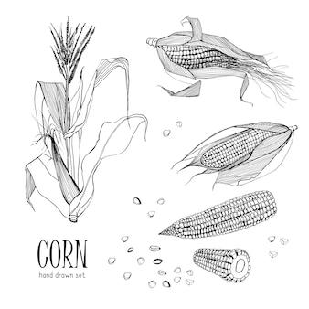 トウモロコシのセットです。輪郭の黒と白の手描きコレクショントウモロコシ。図。