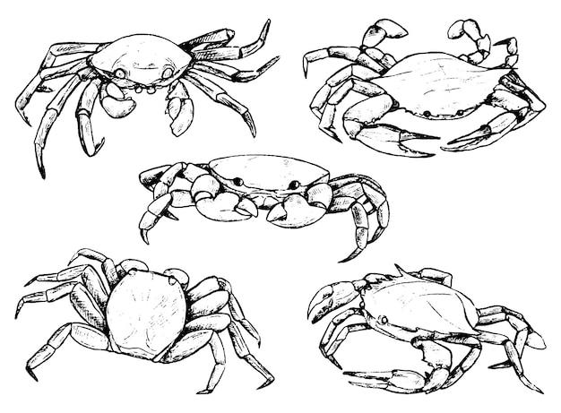 カニのセット。海の野生動物のスケッチ。手描きのベクトル図です。白で隔離のビンテージクリップアートのコレクション。デザイン用の黒インク要素。