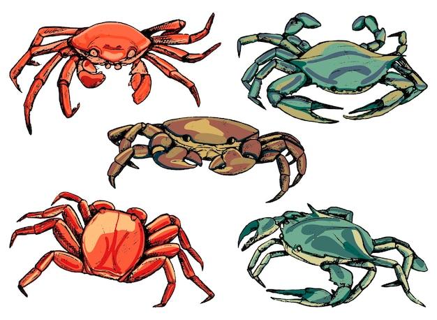 カニのセット。海の野生動物のスケッチ。手描きのベクトル図です。白で隔離のビンテージクリップアートのコレクション。デザインのための色付きの要素。