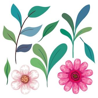 枝と葉のピンク色のかわいい花のセット