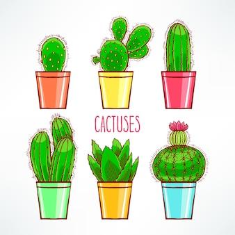 Набор милых маленьких кактусов в красочном цветочном горшке