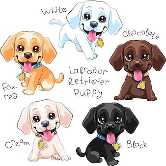 Набор милый маленький щенок лабрадор ретривер собака