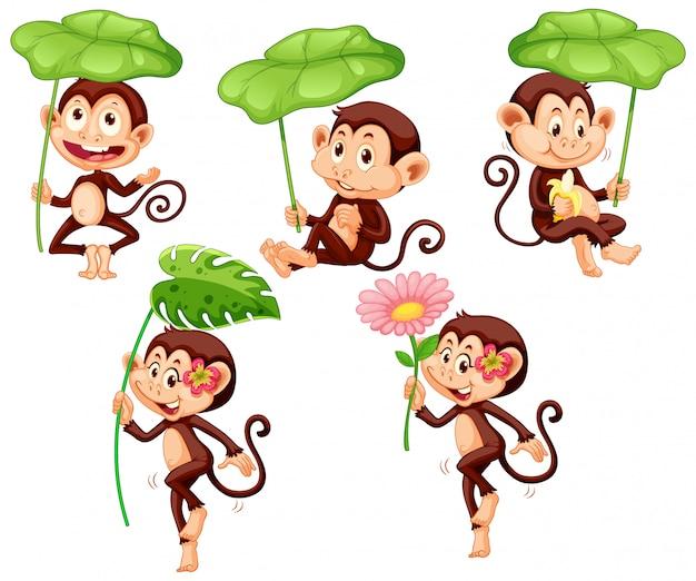 白い背景の上の緑の葉とかわいい猿のセット