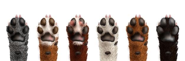 分離されたかわいいリアルな黒、白、灰色、茶色の犬の足のセット