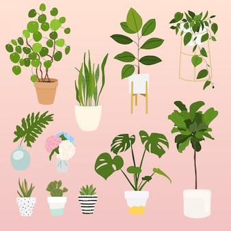 장식 집 식물의 집합입니다. 화분 개체, 관엽 식물 화분 모음.