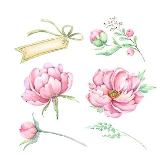 텍스트 벡터 수채화 핑크 꽃 모란 꽃 봉 오리와 배너의 장식 그림 세트