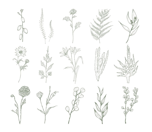 흰색 배경에 분리된 꽃, 양치류, 즙이 많은 식물의 상세한 식물 그림 세트. 등고선으로 그린 꽃 장식 손 묶음. 우아한 자연 벡터 일러스트 레이 션.
