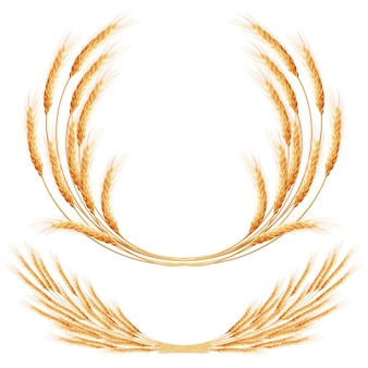 Набор подробных колосья пшеницы.