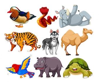 別の動物のキャラクターのセット