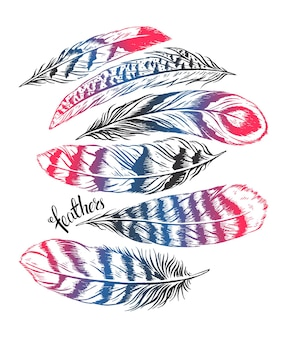 Набор разных красивых перьев. рисованная иллюстрация