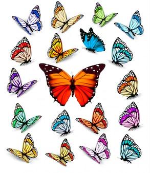 Набор различных красочных бабочек.