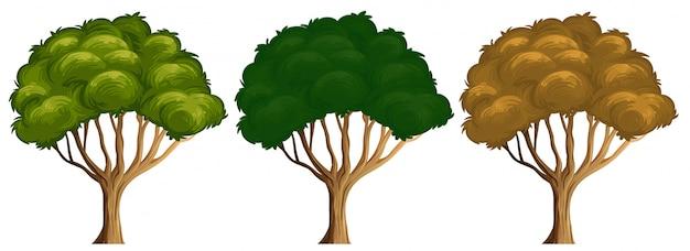 Набор различных цветов дерева