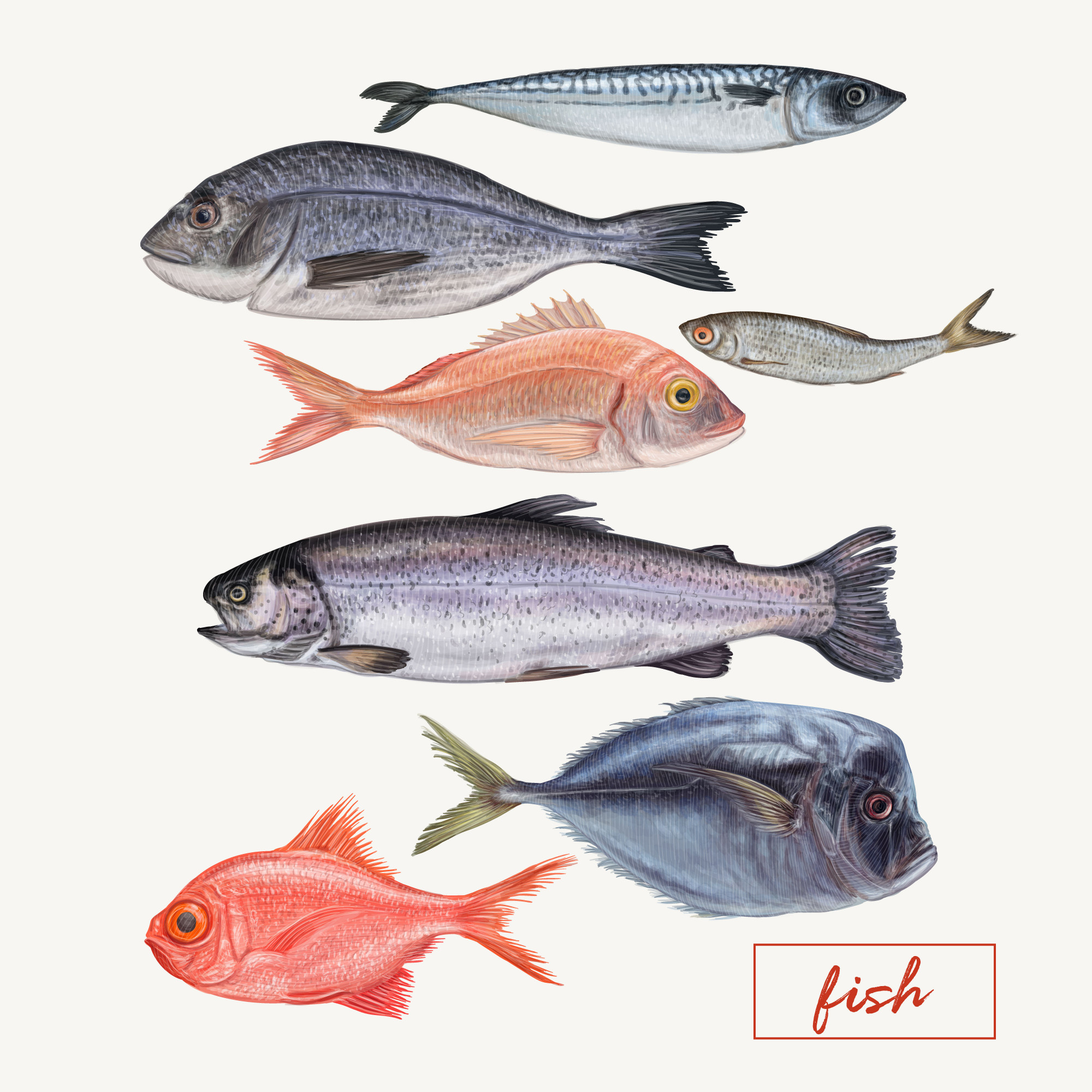 Set of different detailed fishes