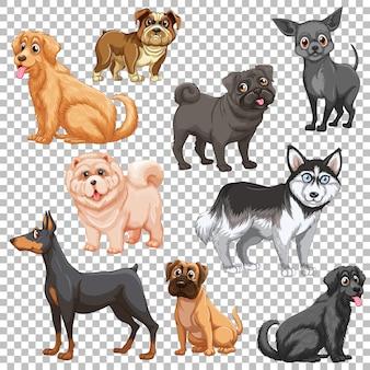 分離されたさまざまな犬のセット
