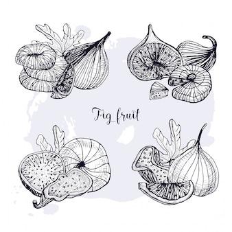 別のイチジクフルーツのセット。新鮮なドライフルーツ、葉、スライス。黒と白の輪郭の手描きイラスト。