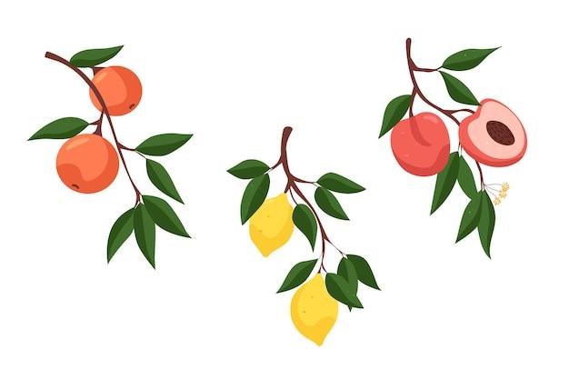Набор разных фруктов ветка с апельсинами ветка с лимоном ветка с персиками