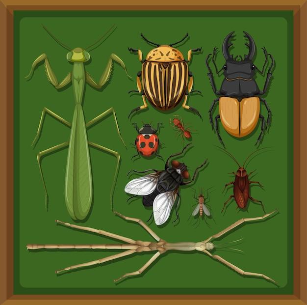 Набор различных насекомых в деревянной рамке