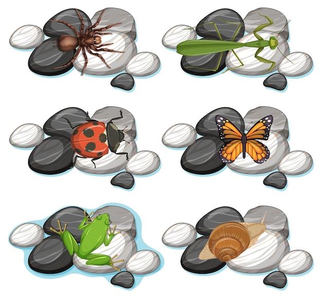 白で隔離のさまざまな昆虫のセット