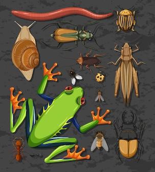 Набор различных насекомых изолированы