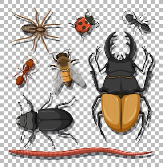 透明な背景にさまざまな昆虫のセット