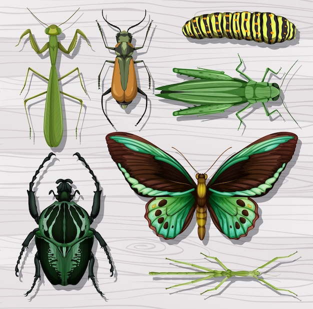 Набор различных насекомых на фоне белых деревянных обоев