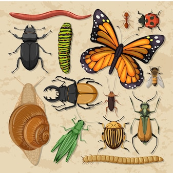 Набор различных насекомых на фоне деревянных обоев