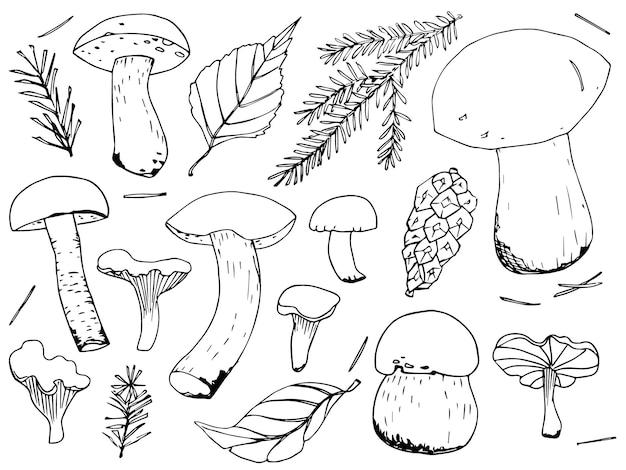 전나무와 잎의 가지에 있는 다른 버섯과 숲 요소 세트. 손으로 그린 스케치