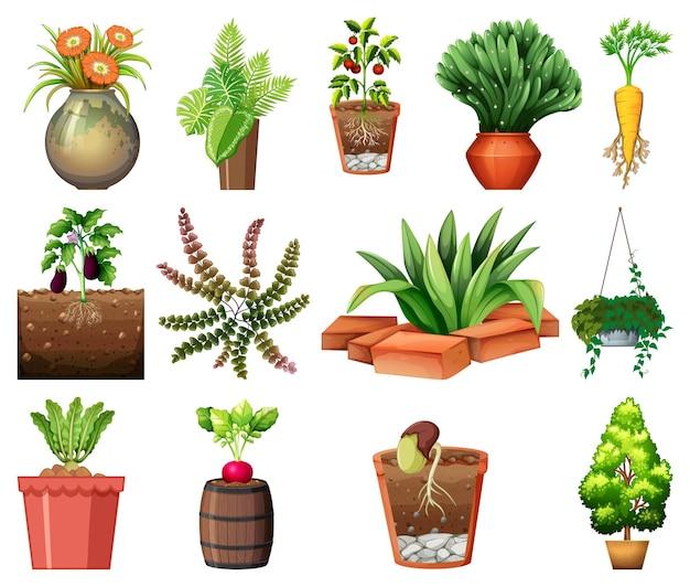 白い背景で隔離の鉢のさまざまな植物のセット