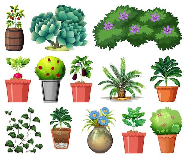 Набор различных растений в горшках, изолированные на белом фоне