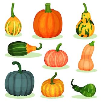 Набор различных спелых тыкв. натуральный сельскохозяйственный продукт. сельскохозяйственное растение. органическая и здоровая пища