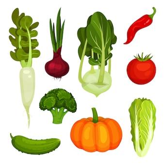 다른 익은 야채 세트입니다. 유기농 농산물. 자연 식품. 채식 요리를위한 신선한 재료. 흰색 배경에 고립 된 스타일에 화려한 삽화.