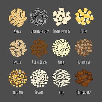 グレーに分離された漫画フラットスタイルの異なる種子や穀物のベクトル図のセット